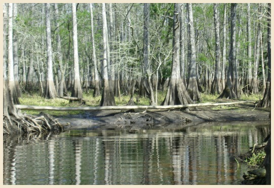 View pricing and information on our airboat tours below